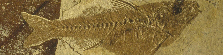 Collection des fossiles du Parc du Luberon
