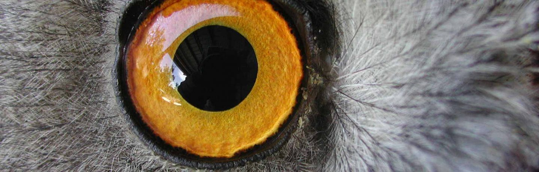 Inventaire scientifique de la faune