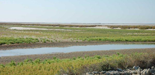 L'occupation du sol en Camargue, état 2016 et son évolution depuis 2001